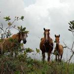 Brasilien 2021 Pferde